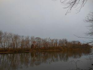 trees_woodpecker