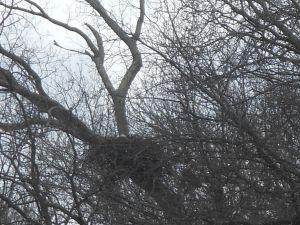 eagle_nest
