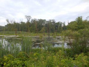 home depot pond